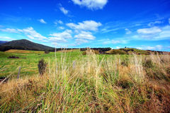 Grassy meadow background Royalty Free Stock Photos