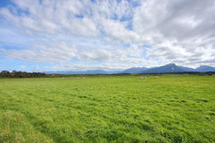 Grassy meadow background Royalty Free Stock Image