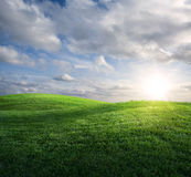 Grassy meadow Stock Photography