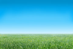 Grassy meadow and the blue sky. Grassy meadow with yellow colors and the blue sky Stock Image