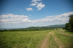 Grassy meadow Stock Images