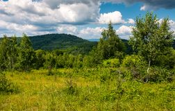 Grassy meadow in forest on a cloudy day. Lovely wild nature summer scenery in mountains. location Uzhanian National Nature Park, Ukraine Royalty Free Stock Images