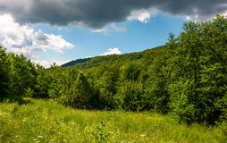 Grassy meadow in forest on a cloudy day. Lovely wild nature summer scenery in mountains. location Uzhanian National Nature Park, Ukraine Stock Image