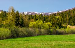 Grassy meadow among the forest. Lovely springtime nature in mountains Stock Photo