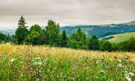 Grassy meadow on forested hill. Lovely nature scenery on an overcast day in summer Stock Photos