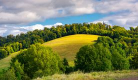 Grassy meadow on a forested hill. Lovely nature scenery under the cloudy sky Stock Photo