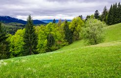 Grassy meadow on forested hillside. Beautiful nature scenery in mountains on an overcast spring day Stock Photos
