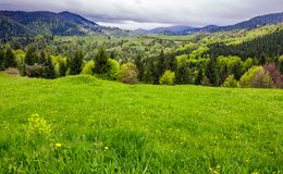 Grassy meadow on forested hillside. Beautiful nature scenery in mountains on an overcast spring day Stock Photography