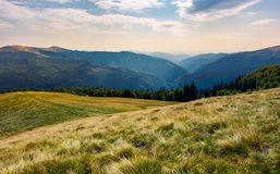 Grassy meadow on forested hillside of Carpathians. Lovely summer landscape in mountains. location near Svydovets mountain ridge, Ukraine Stock Images