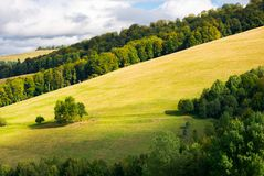 Grassy meadow on a forested hillside. Bunch of trees stand separately. lovely nature scenery Stock Photo