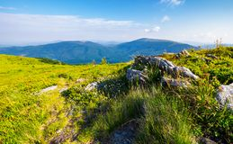 Meadow with boulders in Carpathian mountains in summer. Grassy meadow with giant boulders on the slope. mountain ridge on a beautiful sunny summer day. wonderful Stock Image