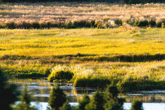 Grassy Meadow in Golden Afternoon Light. Golden afternoon light brings out vivid colours in a small meadow with lake in Alaska Royalty Free Stock Photography