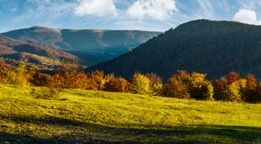 Grassy meadow on hillside in autumn. Beautiful mountainous landscape on a bright day Royalty Free Stock Image