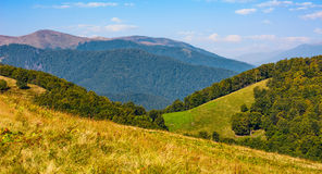 Grassy meadow on a hillside in autumn Royalty Free Stock Photography