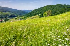 Grassy meadow on a hillside. Beautiful countryside with village down in the valley. lovely bright summer day Royalty Free Stock Photography