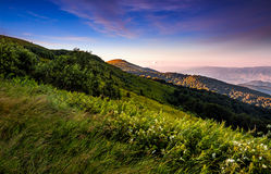 Grassy meadow on a hillside at beautiful reddish sunrise. Gorgeous summer mountain landscape Stock Photos