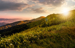 Grassy meadow on a hillside at gorgeous reddish sunset. Beautiful summer scenery Stock Photo