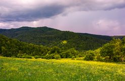 Grassy meadow on the hillside. Lovely nature scenery in mountains Royalty Free Stock Photo