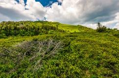 Grassy meadow on hillside of mountain range Stock Photo
