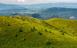 Grassy meadow on hillside in summer time. Lovely nature of Carpathian mountains Stock Images