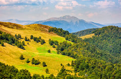 Grassy meadow on mountain in summer. Beautiful summer landscape. green grassy meadow on a hillside on top of mountain ridge with some forest down the hill Royalty Free Stock Image