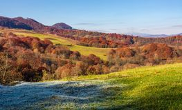 Grassy meadow in mountainous countryside. Beautiful landscape with forest on hillside in warm late autumn day Stock Photography