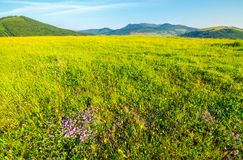 Grassy meadow in mountains. Lovely scenery on clear morning Stock Photo