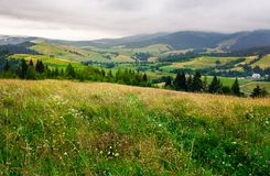 Grassy meadow over the forest on a cloudy day. Lovely mountainous countryside in summer time Stock Images