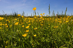 Grassy meadow in spring Stock Images