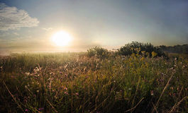 Grassy meadow, sunset Royalty Free Stock Photo