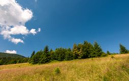 Grassy meadow near the forest. Grassy meadow with wild herbs near the forest. beautiful nature summertime scenery in mountainous area Royalty Free Stock Image