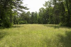 Grassy meadow in wilderness. A grassy overgrown meadow surrounded by the forest in an  area of the wilderness Royalty Free Stock Image