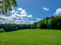 Grassy meadow between the woods. Stock Images