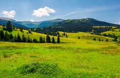 Grassy meadows of Borzhava valley. Forested hill with Velykyi Verkh peak in the distance. lovely summer day with fluffy cloud on a blue sky. popular tourist Stock Photos