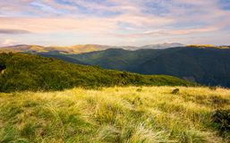 Grassy meadows of Svydovets ridge at sunset. Beautiful landscape of Carpathian mountains under the gorgeous evening clouds stock photos