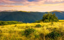 Grassy meadows of Svydovets ridge at sunset. Beautiful landscape of Carpathian mountains under the gorgeous evening clouds Royalty Free Stock Images