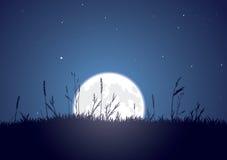 Grassy Moonrise Stock Images