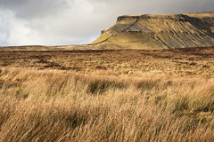 Grassy moors leading to Pen-y-Ghent in Yorkshire Dales National Royalty Free Stock Image
