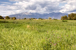 Grassy pasture with mountains Royalty Free Stock Photos