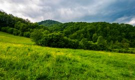 Grassy pasture near the forest in stormy weather. Natural agriculture concept. beautiful mountainous landscape Royalty Free Stock Image