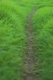 Grassy path Stock Image