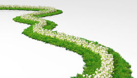 Grassy path with flowers Stock Images