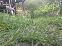 Grassy path Stock Photos