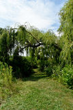 Grassy path Royalty Free Stock Photo