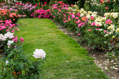 Grassy pathway through a rose garden Royalty Free Stock Photography