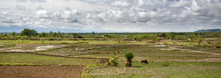 Grassy Plains - Chin State Area, Myanmar Stock Image