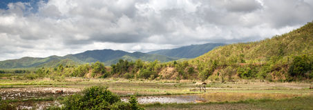 Grassy Plains - Chin State Area, Myanmar Royalty Free Stock Photography