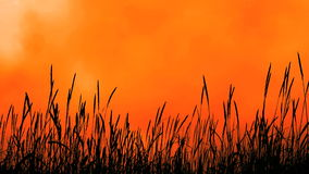 Grassy Plant Stalks Sunset Stock Photo