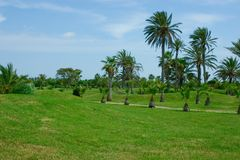 Grassy plot. Many big and small palm trees Royalty Free Stock Images