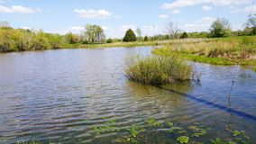 The grassy pond. Sunday afternoon by the pond in the country Stock Photos